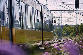 Eine AVG-Stadtbahn fährt an einem Signalmast vorbei. In Den Fesnterscheiben gibt es eine Lichtspiegelung. Im Vordergrund sind unscharf lilafarbenen Blumen zu erkennen.